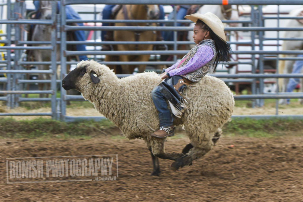 Mutton Busting, Rock Bottom, Rodeo, Bonish Photo