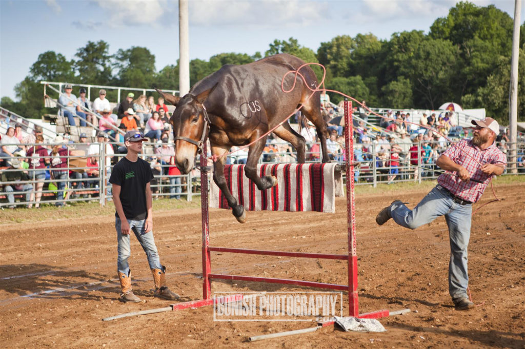 Mule Jumping, Rock Bottom, Bonish Photo
