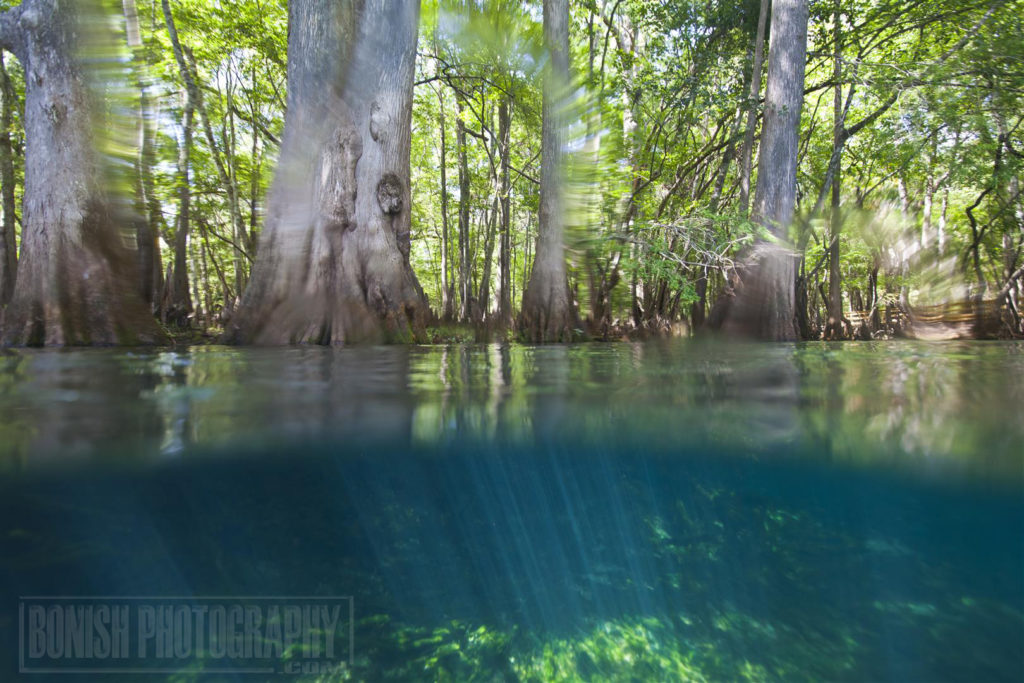Manatee Springs, Underwater Photography,
