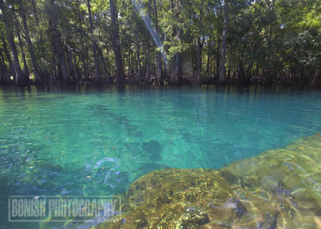 Manatee Springs, Swimming Hole, Bonish Photo