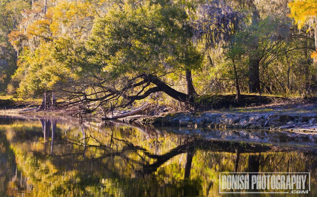 Suwannee River, Bonish Photo,