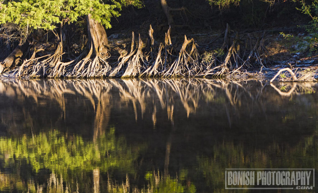 Suwannee River, Bonish Photo, Florida Boating