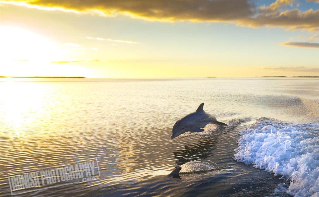 Dolphin, Cedar Key, Pat Bonish, Bonish Photo, Every Miles A Memory