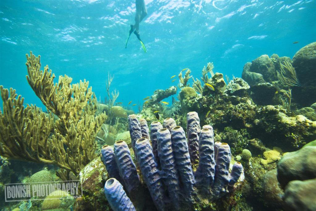 Roatan, Honduras, Bonish Photo, Underwater Photography, Every Miles A Memory