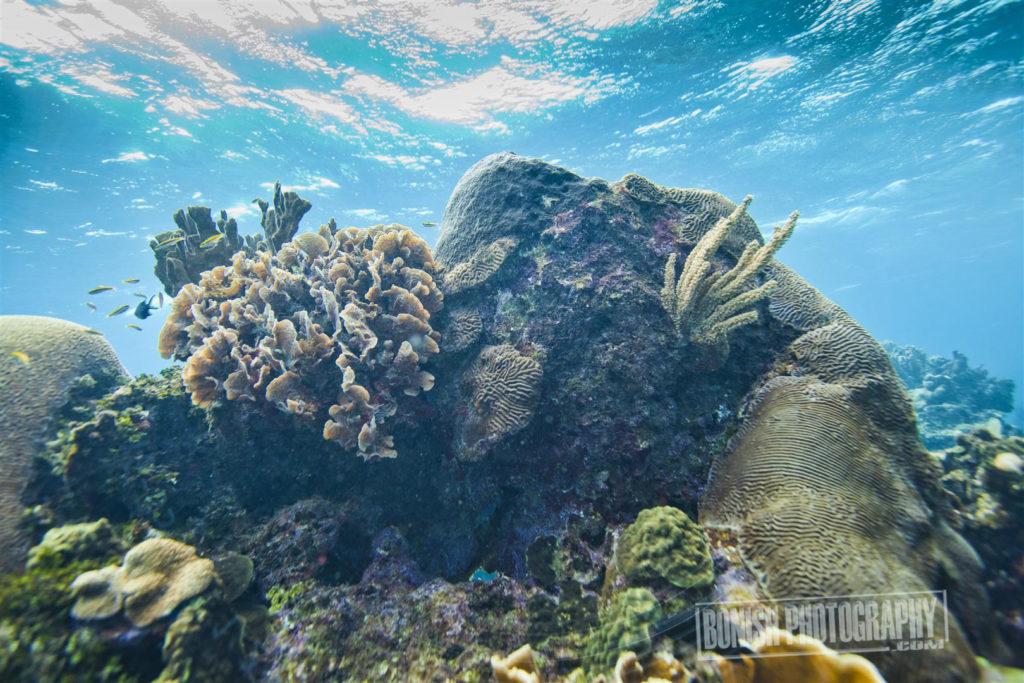 Roatan, Underwater Photo, Bonish Photo, Every Miles A Memory