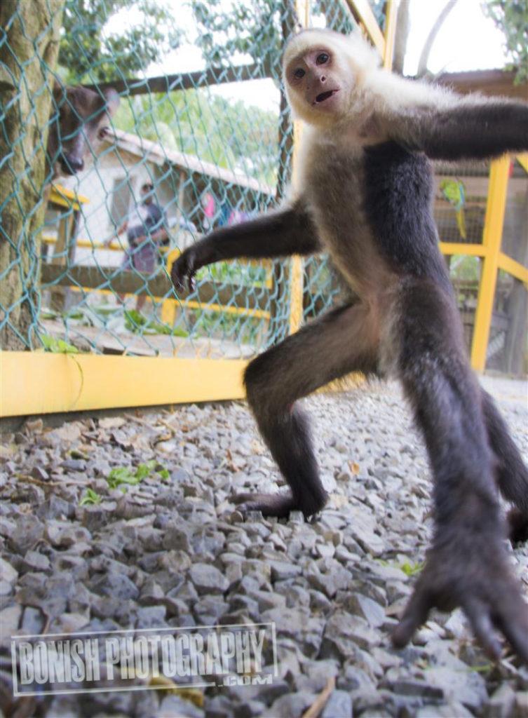 Monkey, Every Miles A Memory, Bonish Photo