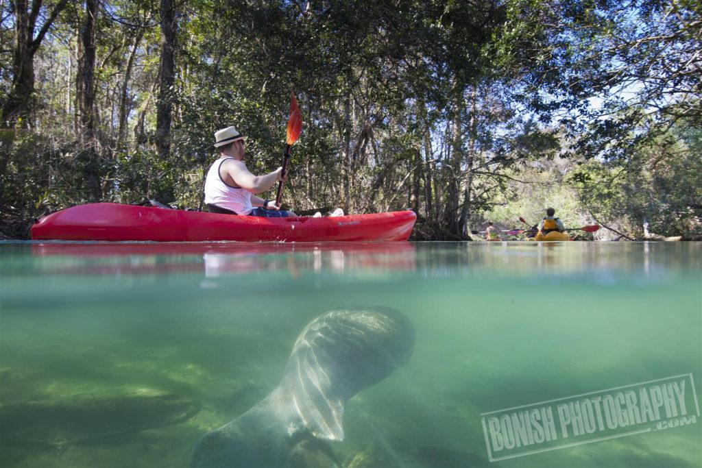 Weekie Wachee River, Bonish Photo, Paddling, Joe Bonish, Pat Bonish, Manatee, Underwater Photo