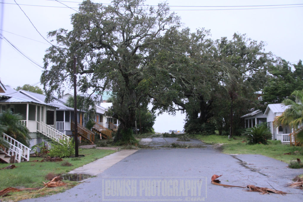 Hurricane Irma, Cedar Key, Bonish Photo, Tree Damage